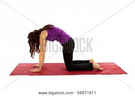 Cat Pose In Yoga