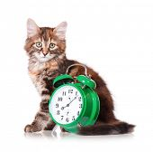 Adorable kitten with green alarm clock, isolated on white background poster