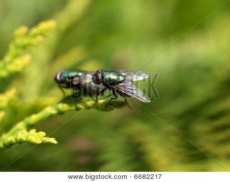 Matting flies