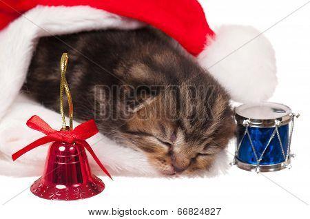 Asleep Kitten