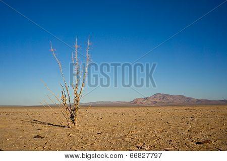 Dead In The Desert