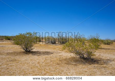 Green Growth In The Desert