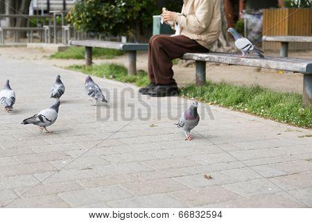 Old Man Feeding Birds In A Park