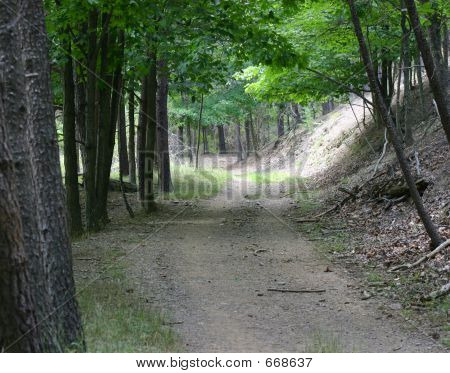 Path Or Trail In The Woods