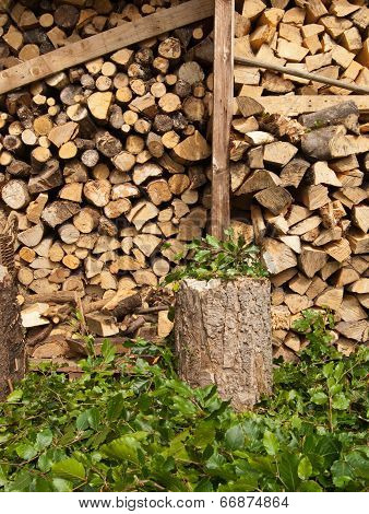 Logs and Leaves