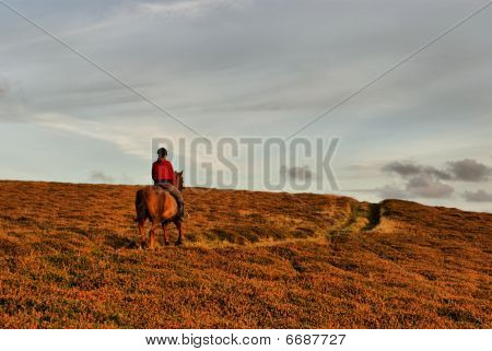 poster of Horse rider on the road in heather field