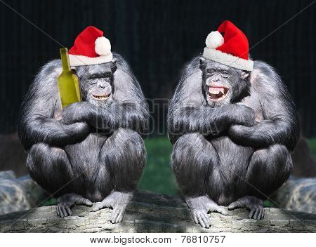 Two drunken chimpanzees have a fun on christmas party.