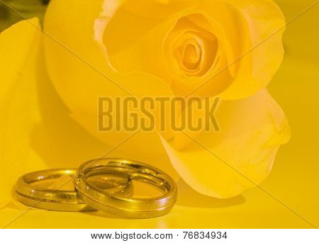 yellow rose and rings
