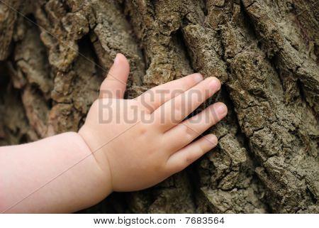 Kinder Hand befindet sich auf einer alten stump