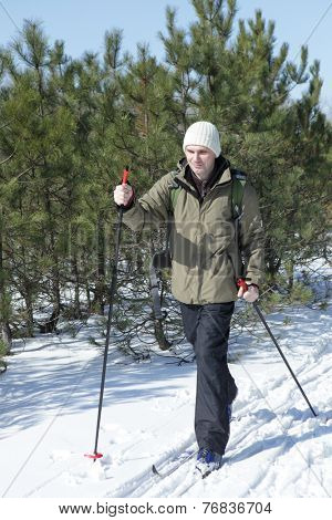 Cross-country skiing in the winter pine forest