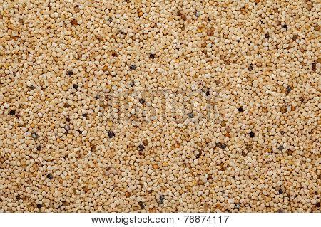 Posta dana or khaskhas or (Poppy seed) (Papaver somniferum)