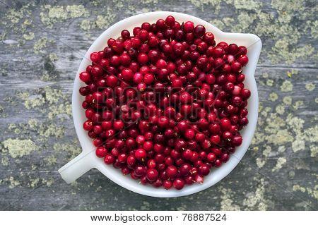 Cowberries In Bowl.