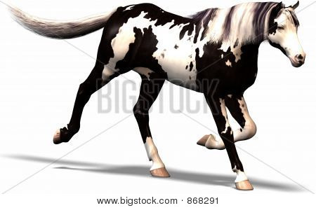 a wild horse with black and white conturs. poster