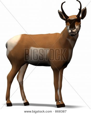 Antilope From Africa
