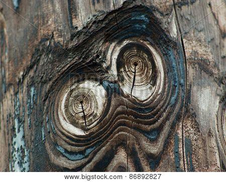 Owl Eyes On  A Wood