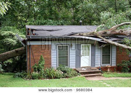 Oak Impaling a House