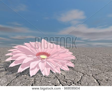 Beautiful Flower In Desert, Strength Concept