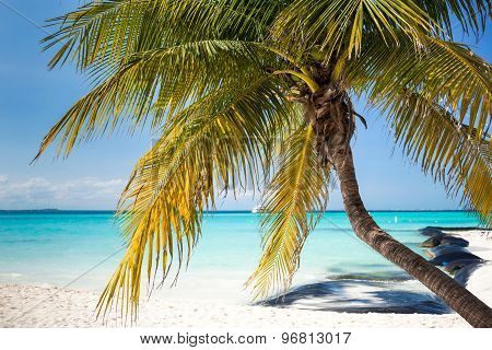 Tropical White Sand Beach With Coconut Palm Trees.