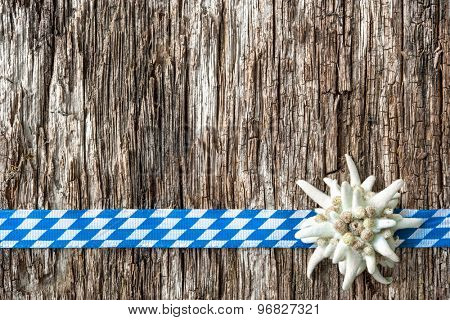 Edelweiss with Bavarian ribbon on weathered wood background