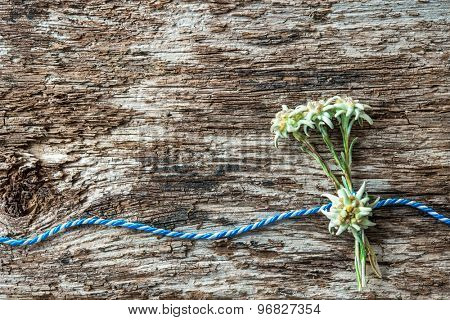 Edelweiss flowers with Bavarian gift cord on weathered wood background