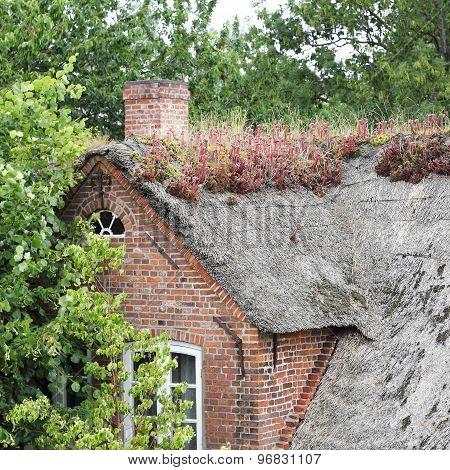 Thatched Roof With Blooming Houseleek, Sempervivum Tectorum