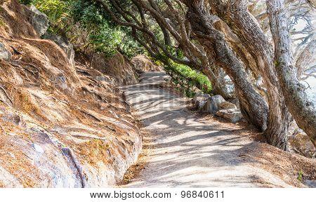 Undulating Coastal Path Mount Maunganui, Scenes From The Track.