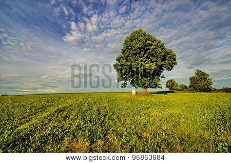 Tree loner and calvary