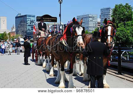 Horses and carriage, Liverpool.