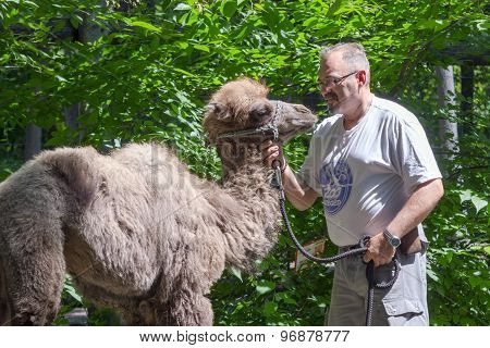 Two-humped Camel (camelus Bactrianus) Training