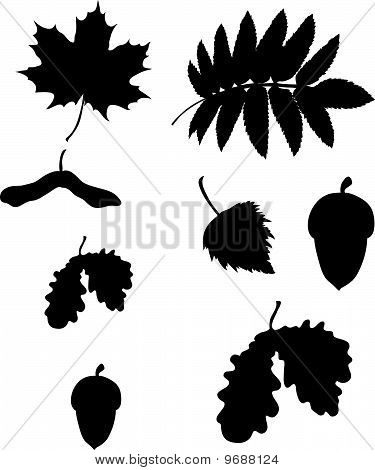 set of different leafes