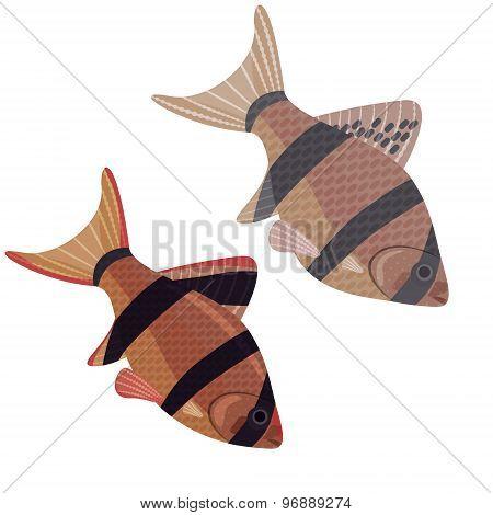 Fishes Aquarium Exotic.