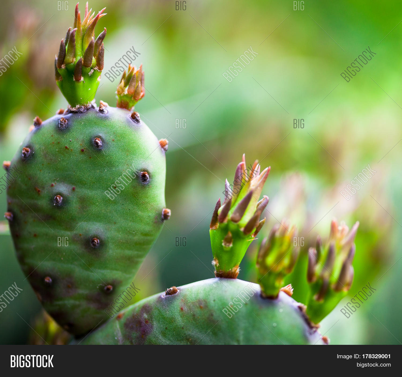 Cactus Succulent Image Photo Free Trial Bigstock