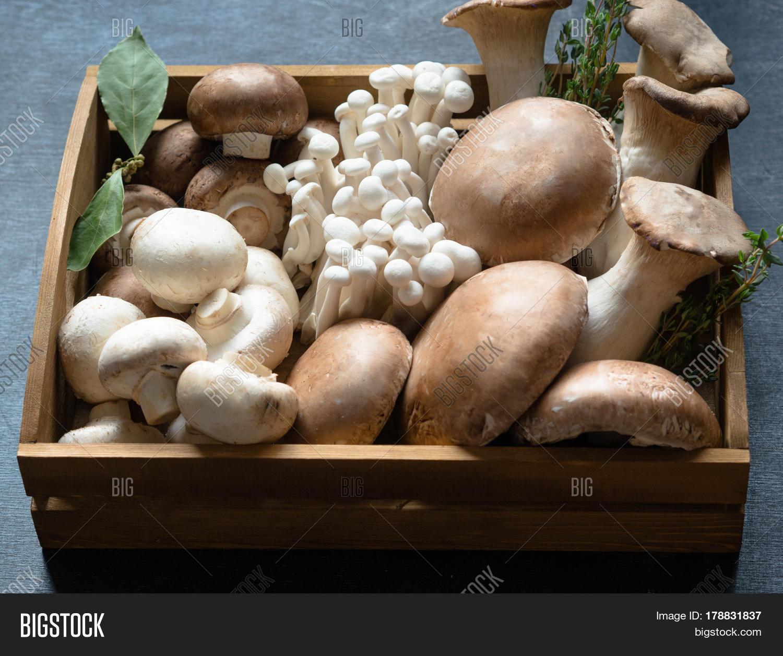 Various Raw Mushroom Image Photo Free Trial Bigstock