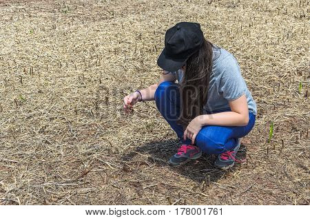 Woman Checking Soybean Root After Harvest