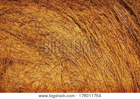 autumn haystack at the farm - texture image