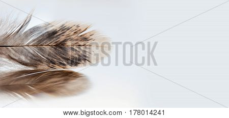 Bird colorful feathering textured pattern on gray background. Macro view beautiful plumage feather on gray background. copy space, soft focus.