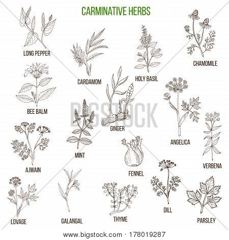 Carminative Herbs. Hand Drawn Set