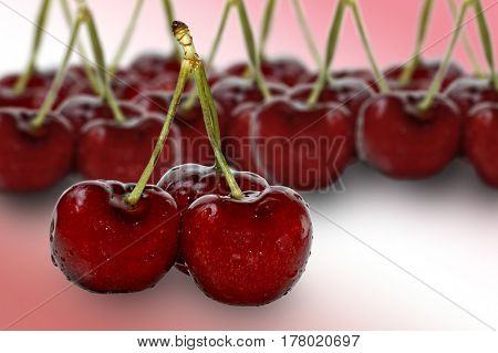 Three cherries in foreground with more cherries in background