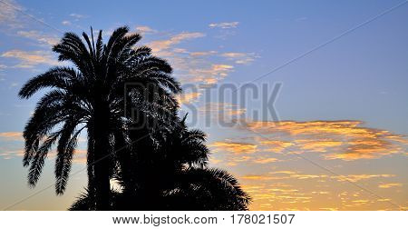Palm tree backlit with splendid sky of intense color at dawn