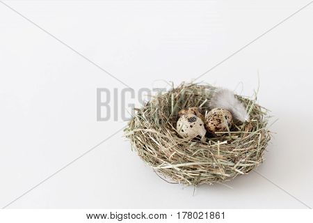 Easter decoration quail eggs lie in a bird's nest on a white background with space for text daylight horizontal image minimalism