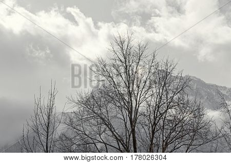 Carpathians Mountains, Bucegi  Range With Trees, Pine Forest With Fog And Clouds, Winter Time