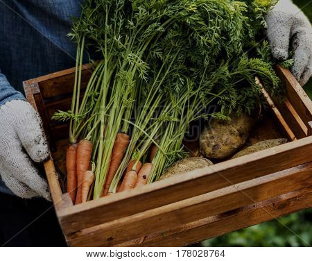 Man holding crate of organic fresh agricultural product