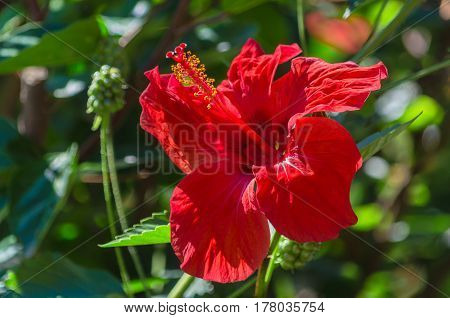 Tropical flower Amaryllis in the garden lit by the sun