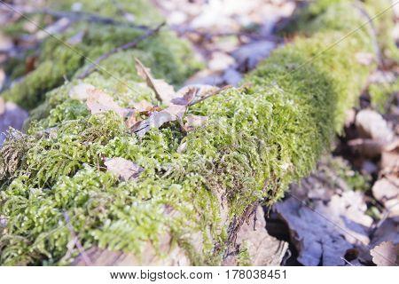 Wild forest, Fallen tree in the forest. Wild forest median strip Europe.