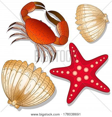 Set of marine inhabitants. Crab, starfish and shell. White background. Isolated objects. Vector Image