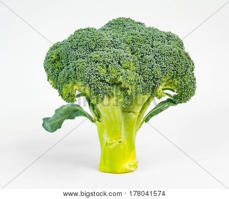 Broccoli reminiscent of the shape of a tree isolated on white background