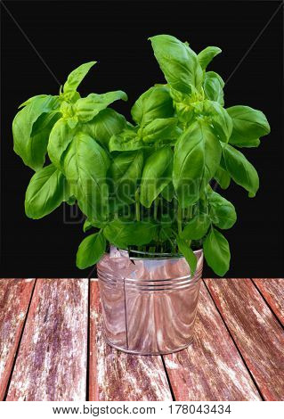 Green fresh basil in metal bucket on red table