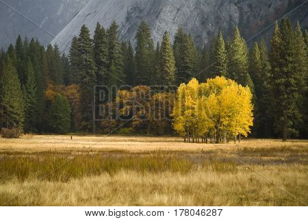 In the valley floor a group of trees stand out with it's fall colors
