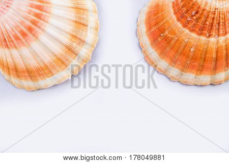 Sea Themed Simple Composition: Sea Shells And Copy Space For Text