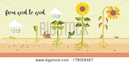 From Seed To Seed Plant Growth Proccess